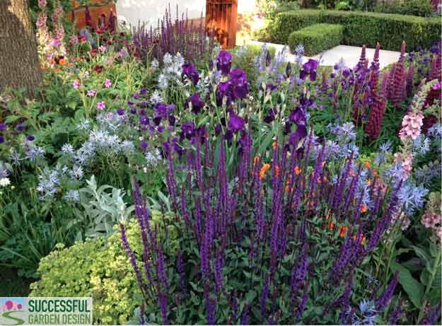 Chelsea-purple-planting
