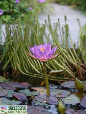 sander-pond