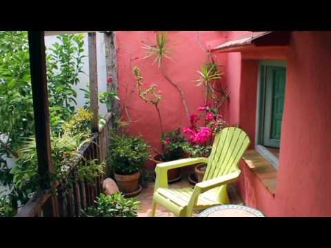 Successful Garden Design Tips – How to use colour in the garden effectively…