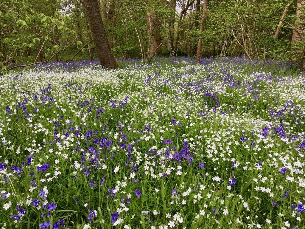 Natural Garden Design Styles Vs Native & Wildflower Planting for Wildlife