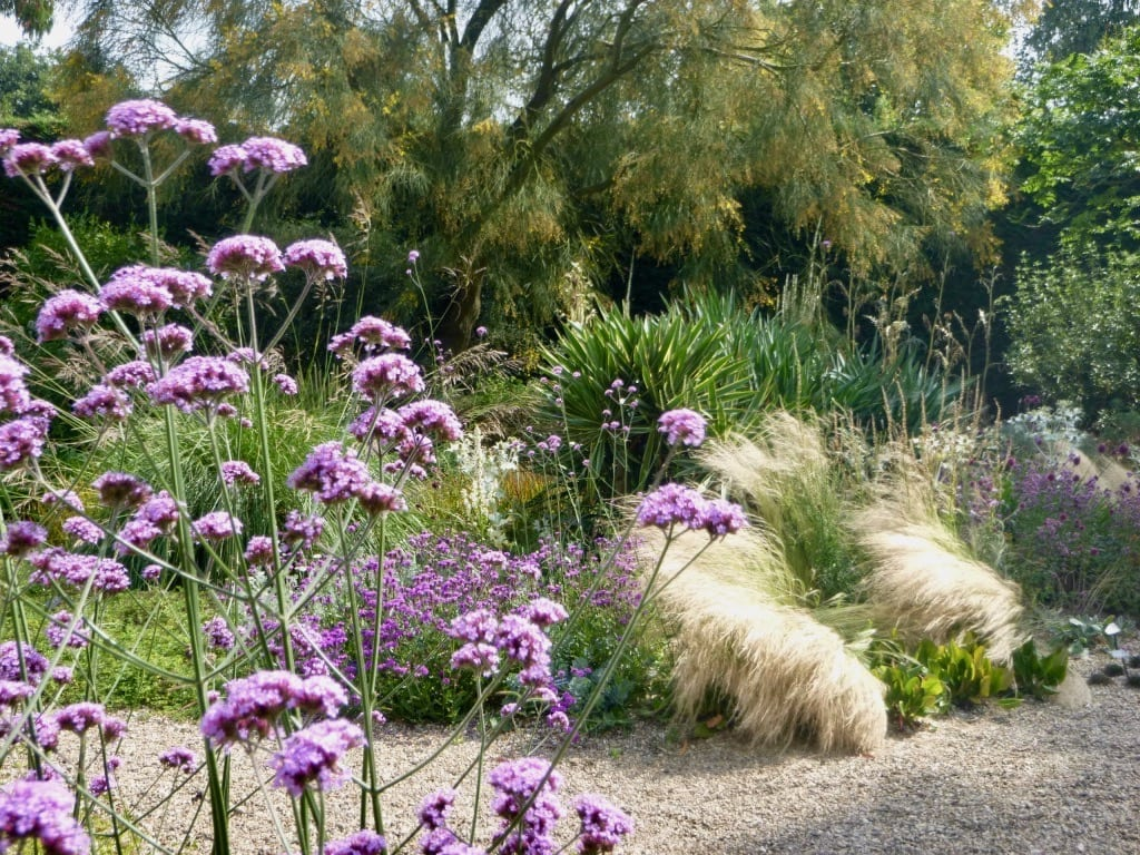 Drought tolerant gardens – lush Xeriscaping not Zeroscaping deserts!
