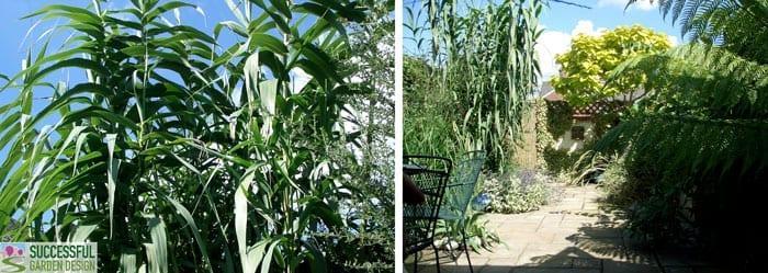 Garden Privacy – Screening the neighbours!